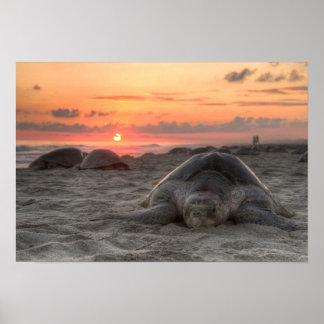 Tortugas de mar en la puesta del sol poster