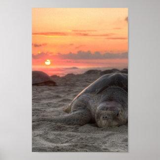 Tortugas de mar en la puesta del sol posters