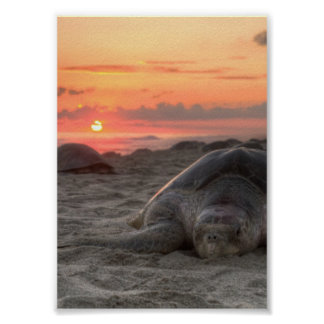 Tortugas de mar en la puesta del sol impresiones