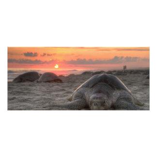 Tortugas de mar en la puesta del sol tarjeta publicitaria personalizada