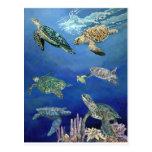 Tortugas de mar majestuosas tarjetas postales