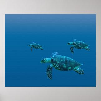 Tortugas de mar poster