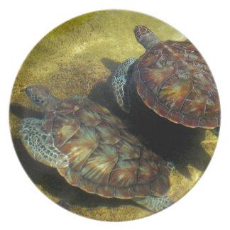 Tortugas de mar plato