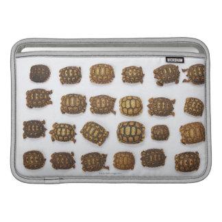 Tortugas del bebé dispuestas en filas funda para macbook air