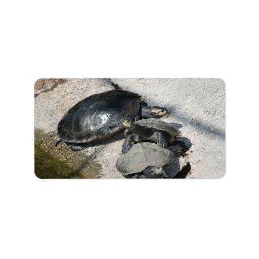 Tortugas del resbalador en una foto de la fila etiquetas de dirección