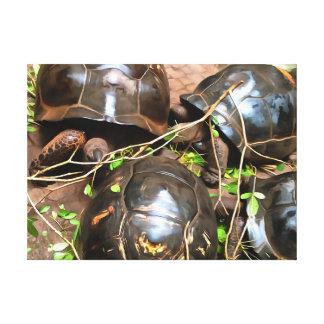 Tortugas en descanso impresiones en lona estiradas