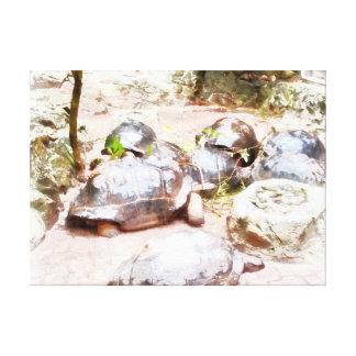 Tortugas en una cola lona envuelta para galerías