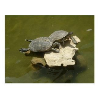 Tortugas que toman el sol tarjeta postal