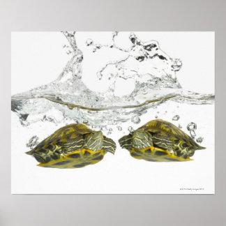 Tortugas rojas del resbalador póster