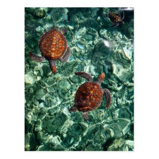 Tortugas Postales