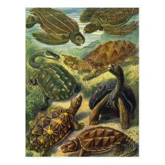 Tortugas y tortugas de mar del vintage de Ernst Postales