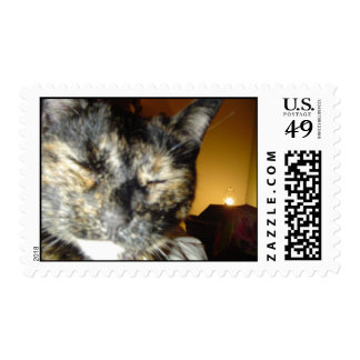 torty cat stamps