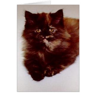 Torty Persian Kitten Blank Card