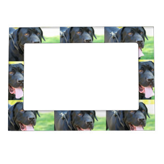 Tosa Inu Dog Magnetic Photo Frames