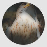 'Tótem Hawk Pegatinas Redondas