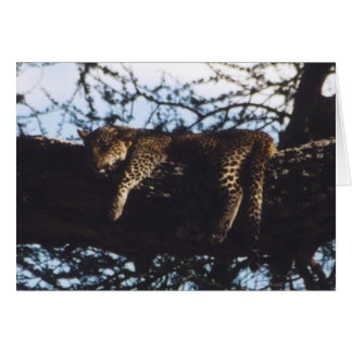 Toto Chui (Baby Leopard) Card