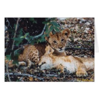 Toto Simbas (leones del bebé) Tarjeta