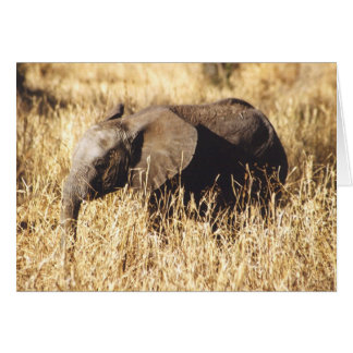 Toto Tembo (Baby Elephant) Card