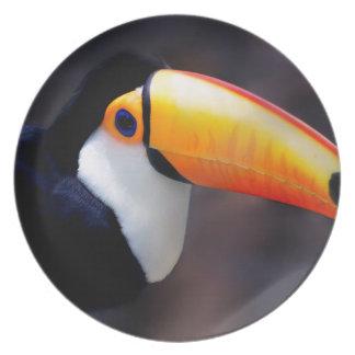 Toucan 2 melamine plate