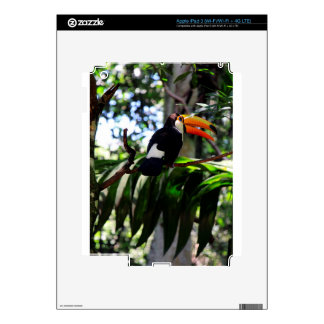 Toucan 3 decals for iPad 3