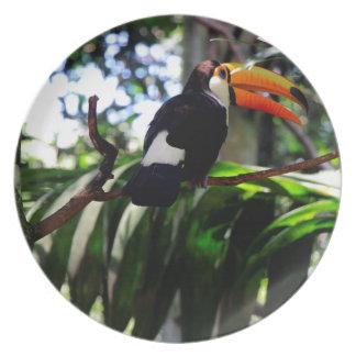 Toucan 3 dinner plate