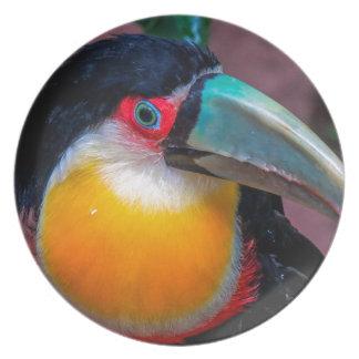 Toucan 4 melamine plate