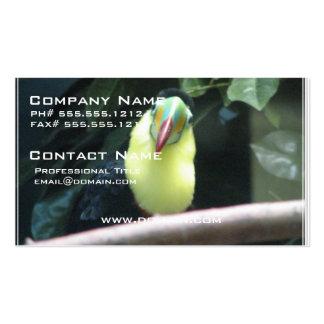 Toucan Bird Business Card Template