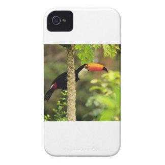 Toucan Bird Case-Mate iPhone 4 Case