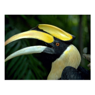 Toucan, Bird Park, Jurong, Singapore Postcard