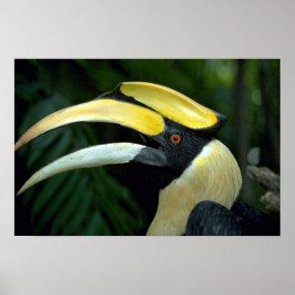 Toucan, Bird Park, Jurong, Singapore Poster