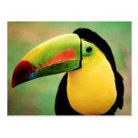 Toucan Bird Wild Nature Colorful Photography Postcard