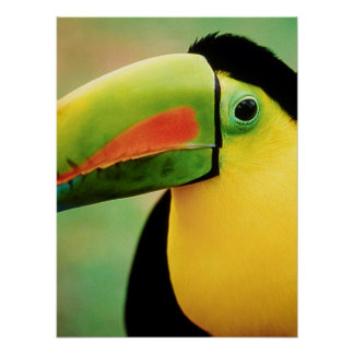 Toucan Bird Wild Nature Colorful Photography Poster