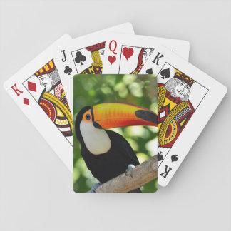 Toucan Cartas De Póquer