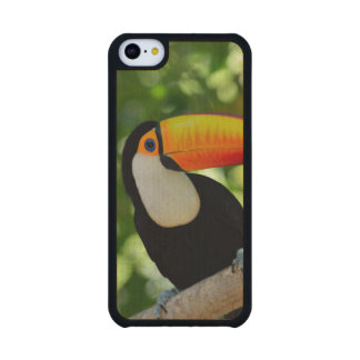 Toucan Carved® Maple iPhone 5C Case