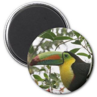 Toucan en la selva imán redondo 5 cm