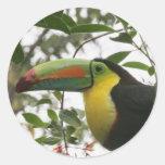 Toucan en la selva pegatina redonda