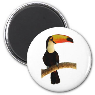 Toucan exotic bird of the Brazilian fauna Magnet