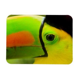 Toucan face close up, Belize Magnet