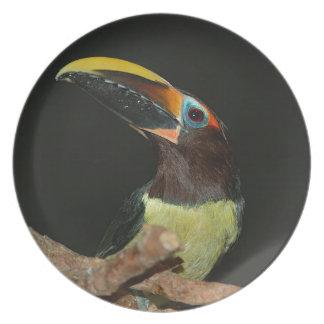 Toucan gift melamine plate