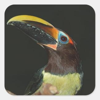 Toucan gift