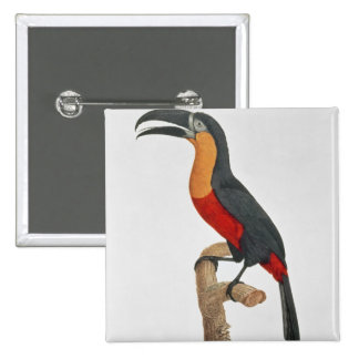 Toucan: Great Red-Bellied by Jacques Barraband Pinback Button