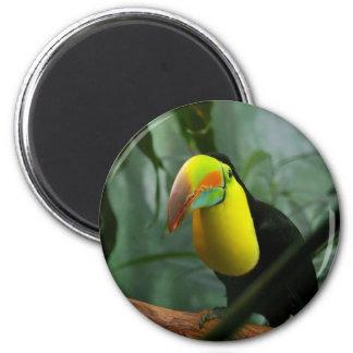 Toucan Imanes De Nevera