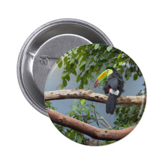Toucan in a Tree Pinback Button
