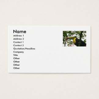 Toucan in the Jungle Business Card