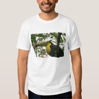 Toucan in the Jungle Dresses