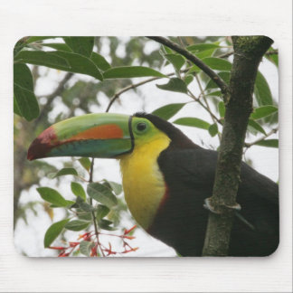 Toucan in the Jungle Mouse Pad