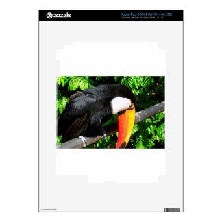 Toucan iPad 3 Decals