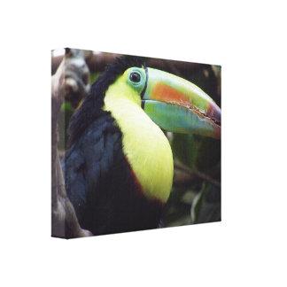 Toucan Lona Envuelta Para Galerías