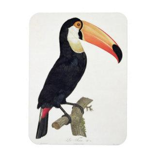 Toucan No.2, de la 'historia de los pájaros de Par Imán Rectangular