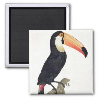 Toucan No.2, de la 'historia de los pájaros de Par Imán Cuadrado
